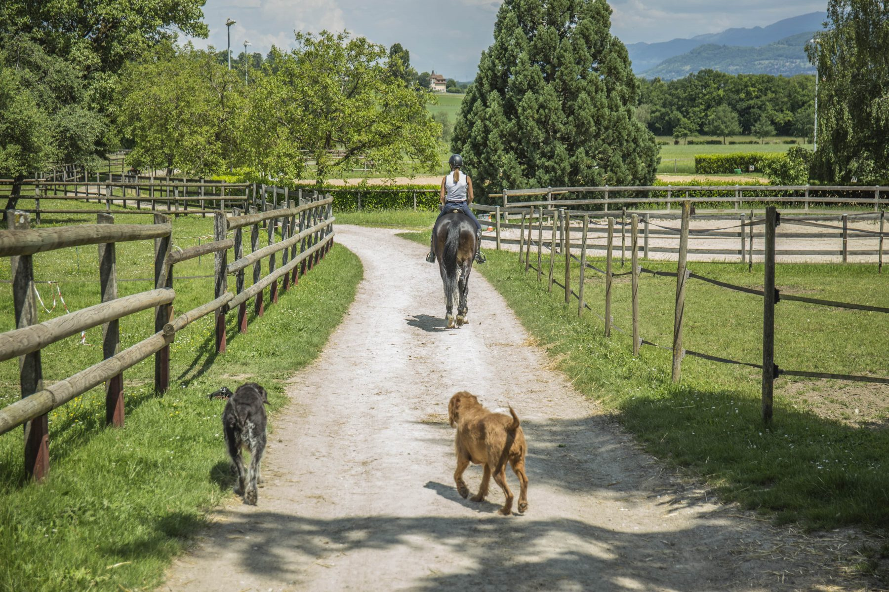 cours-prives-chevaux-geneve-min